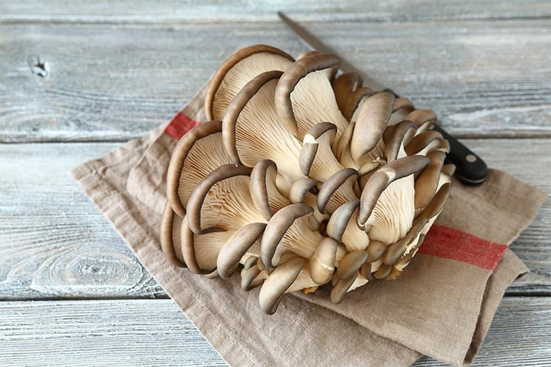 Cocinar Setas Plancha | Recetas De Setas Setas A La Plancha